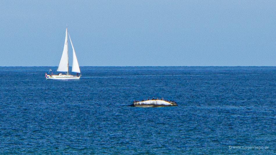 Segelschiff nahe des Findlings