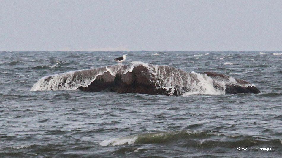 Wellen über dem Findling Buskam