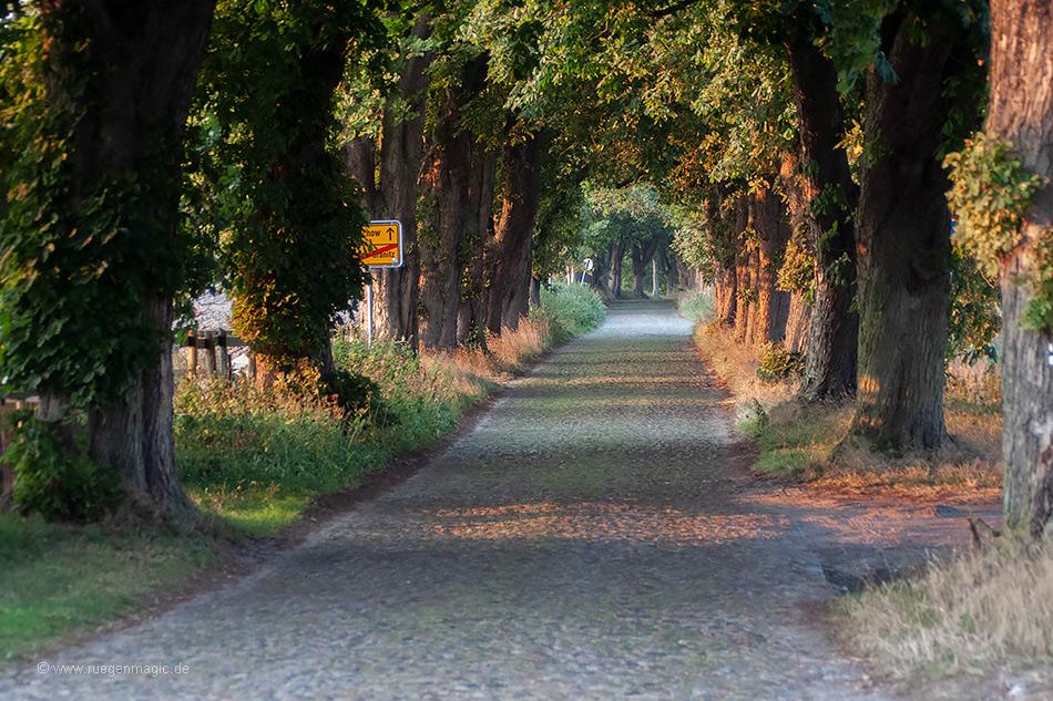 Kastanienallee bei Lancken-Granitz