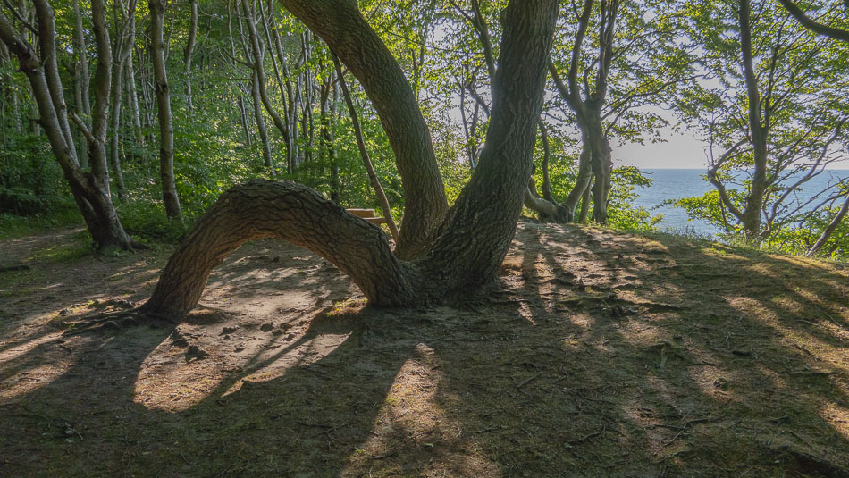 Baum im Märchenwald