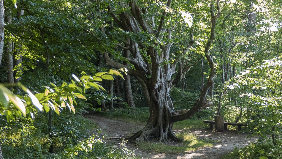 Bizarr verformter Baum