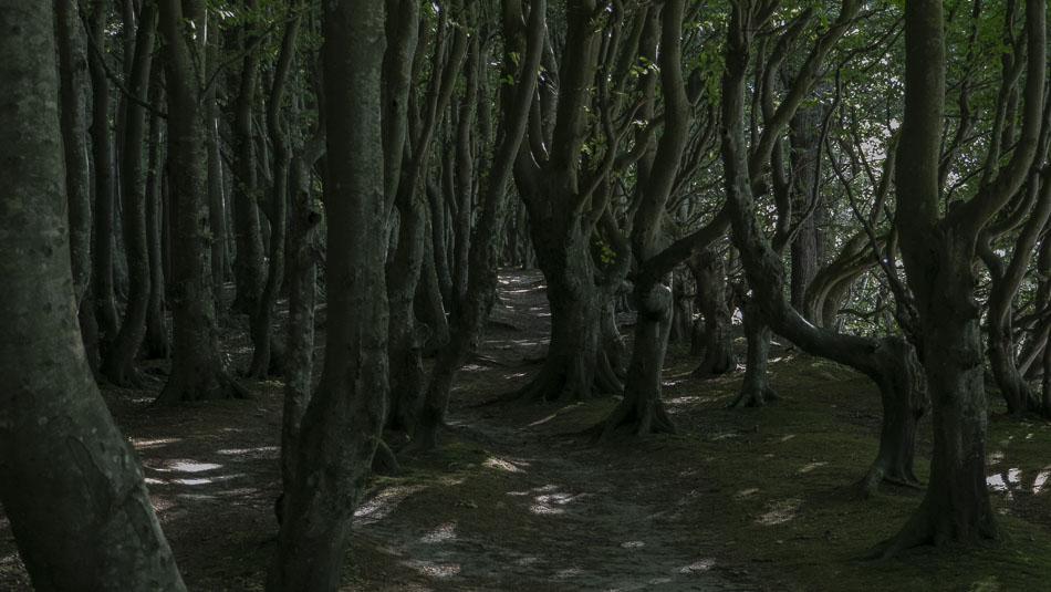 Blick in den Märchenwald
