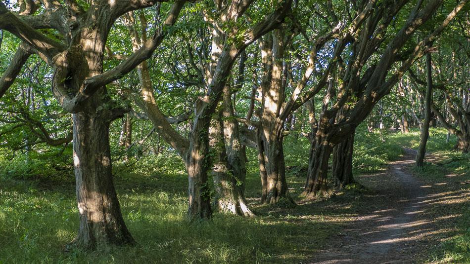 Weg in den Märchenwald bei Schwarbe