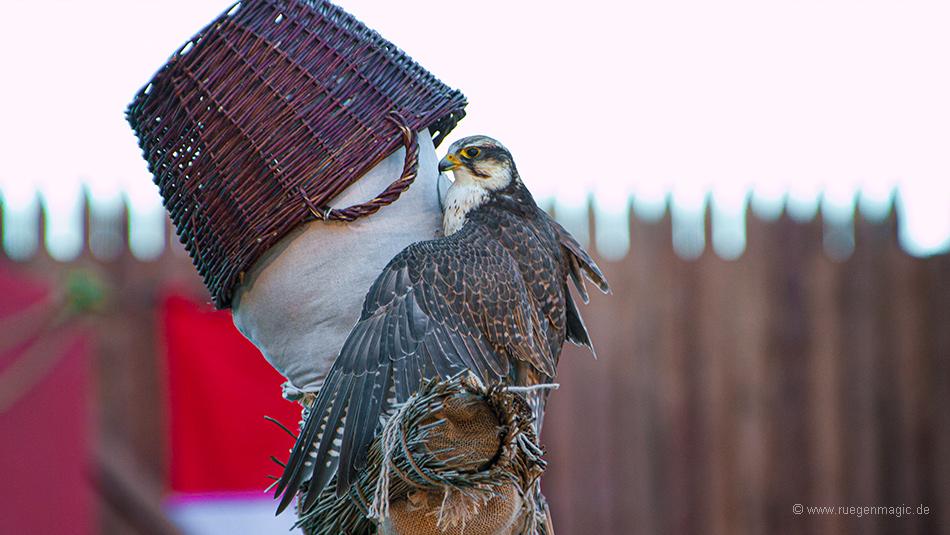 Einsatz des Falken
