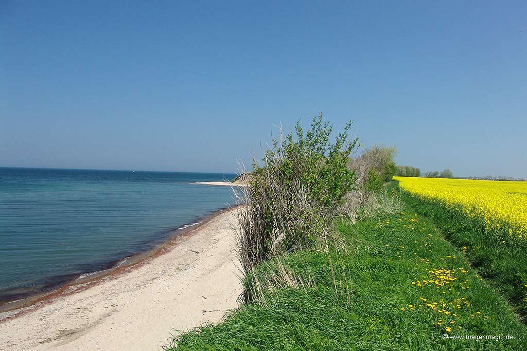 Der Ostseestrand bei Goos (Ostsee)