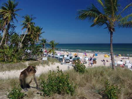 Ostseestrand von Baabe mit Palmen?