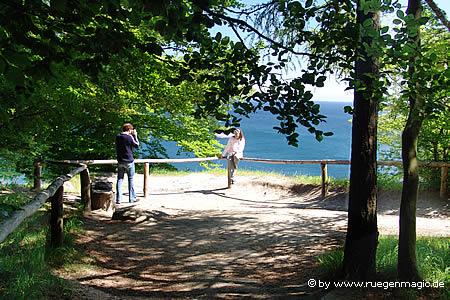 Buchenwald an der Steilküste des Nationalpark Jasmund