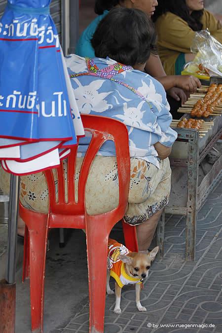 Kleiner Hund unter dem Plastestuhl einer dicken Thailänderin