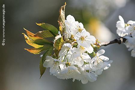 Frühlingsbeginn auf Rügen