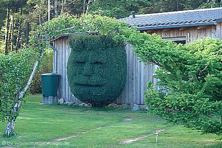 Heckenkunstwerk am Bakenberg