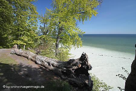 Weiße Küste bei Sassnitz, die Kreide färbt das Meer