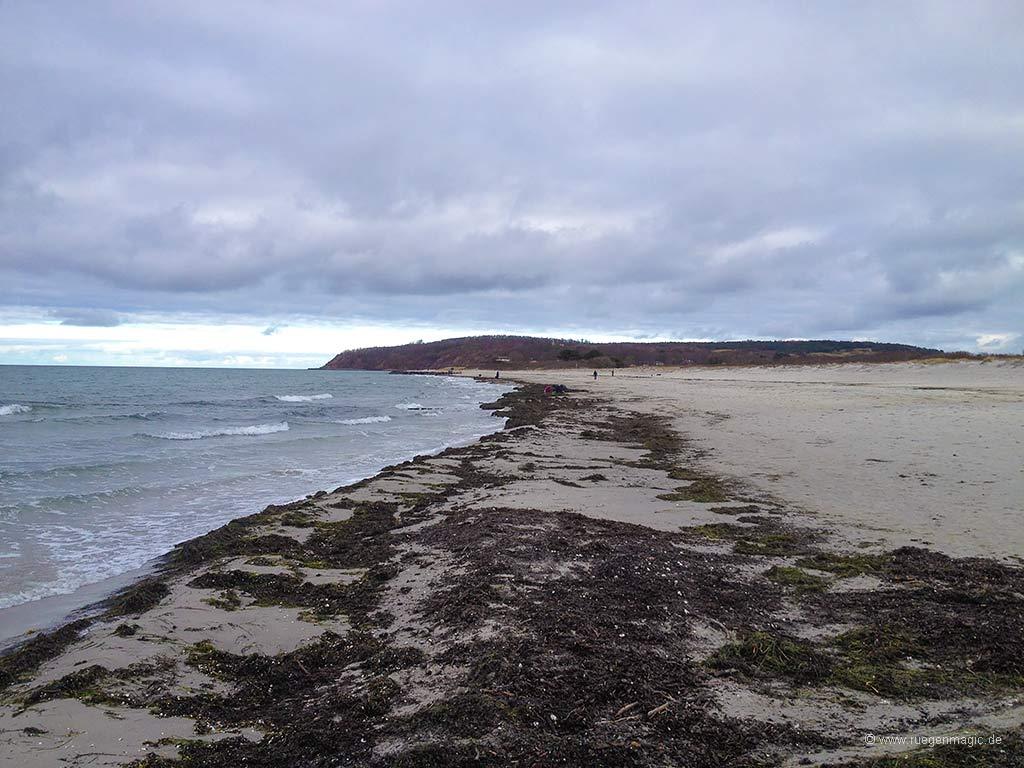 Der Ostseestrand der Insel Hiddensee