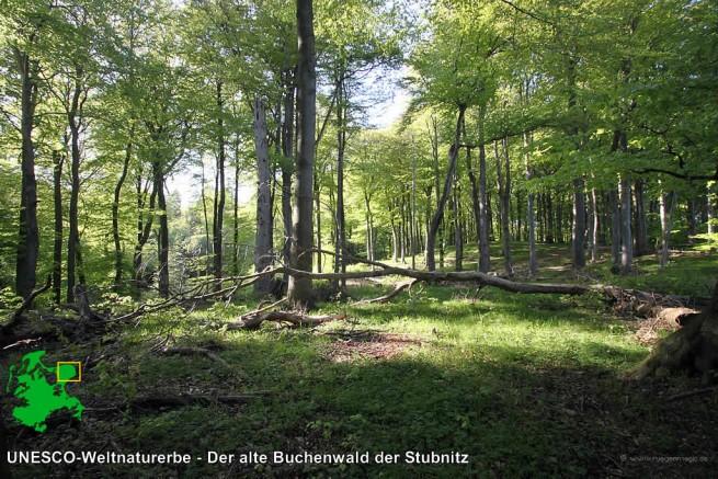 Unseco-Weltnaturerbe - Der Buchenwald bei Sassnitz