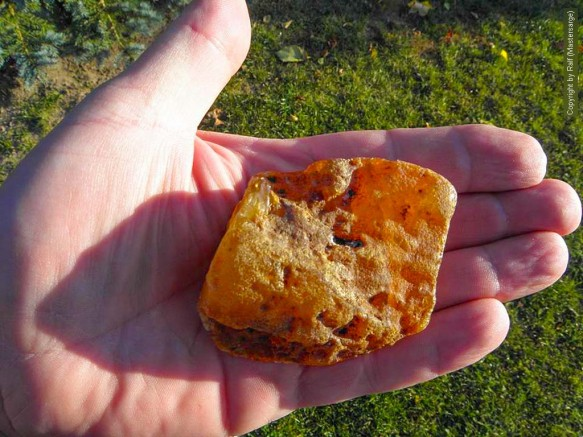 Der 55 Gramm schwere Berstein von Ralf ist bis jetzt unser größter gemeldeter Fund für 2015!