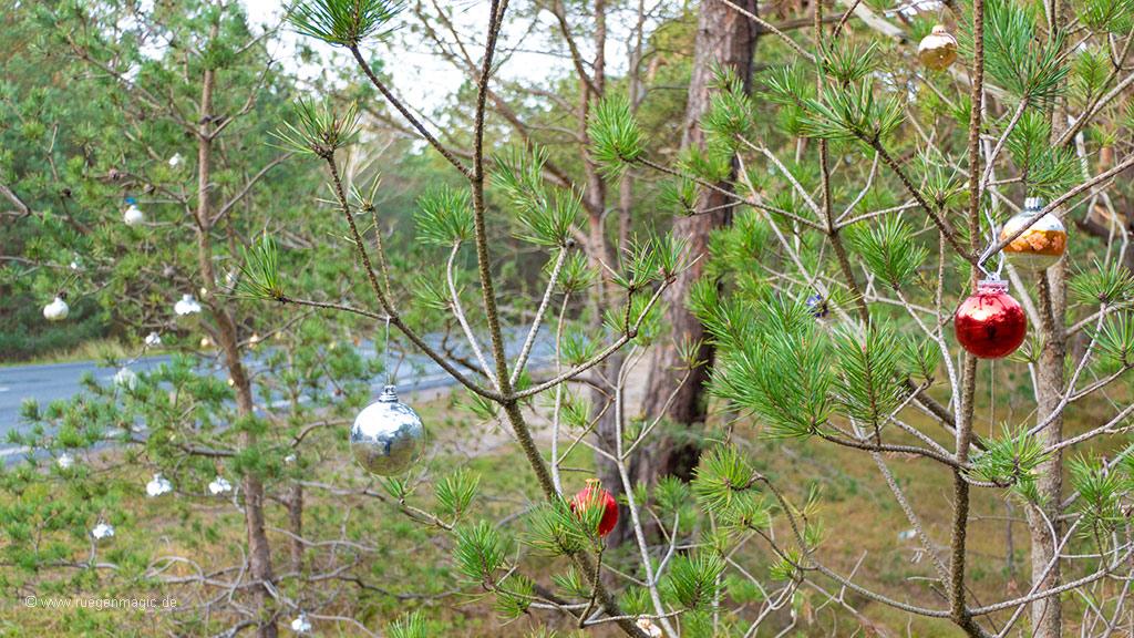 Kiefernbäume an Rügens Straße schmücken